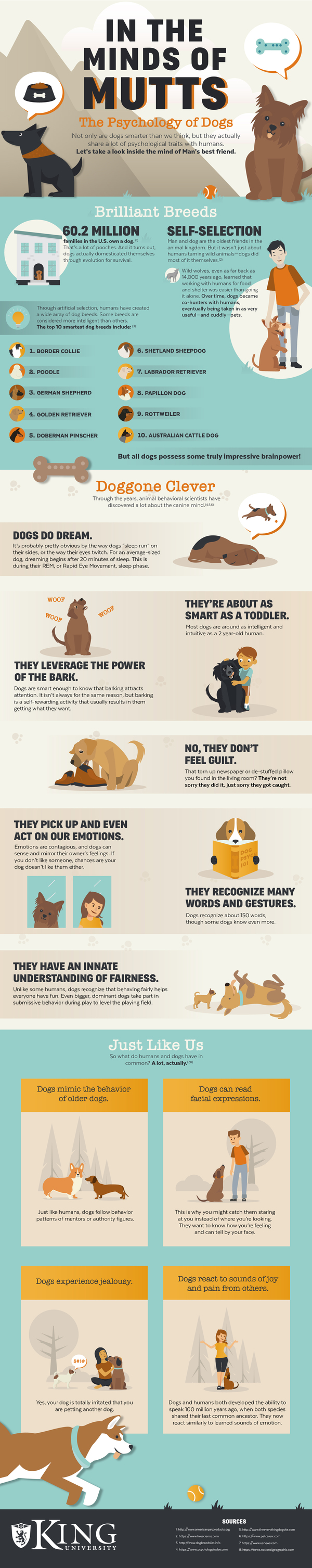 In the Mind of Mutts: The Psychology of Dogs