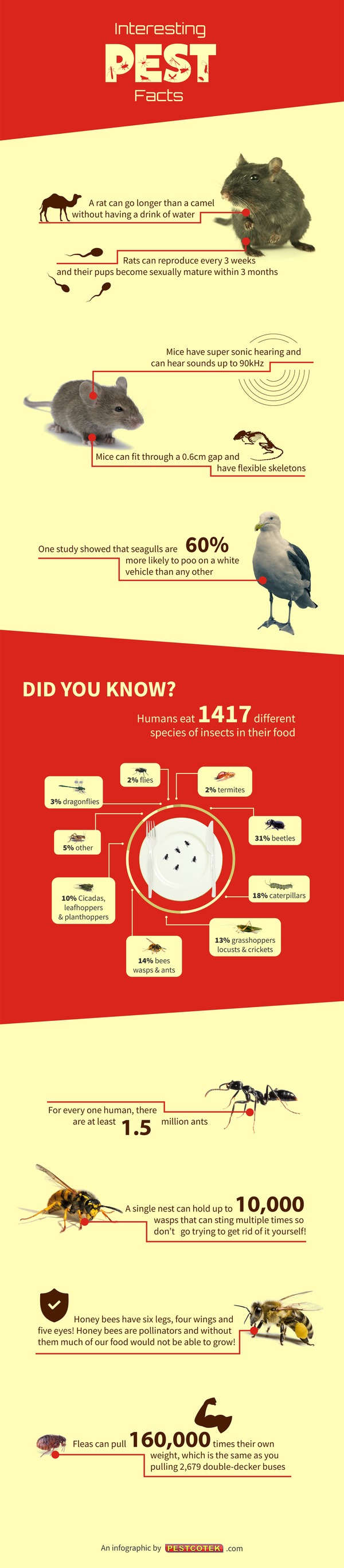 Interesting Pest Facts